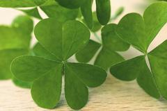 Green clover leaf Stock Photos
