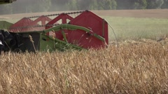Farm plantation harvesting machine trashing ripe wheat rye harley plants field - stock footage