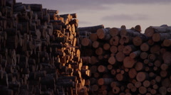 Logging Industry - Forestry and Wood Production - stock footage