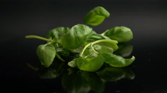 Basil leaves falling in slow motion Stock Footage