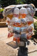 Aquarium fish displayed in plastic bags for sale - stock photo