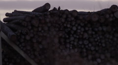 Pile of logs at dusk - Forestry and lumber industry - stock footage