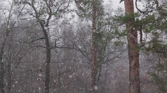 Snow in the Pine Forest (Tilt Up, 50 fps) Stock Footage