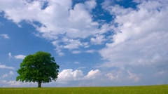 Time lapse of moving clouds over single isolated oak tree Stock Footage