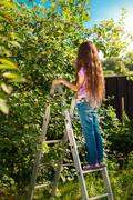 Girl standing on high ladder at harvesting garden Stock Photos