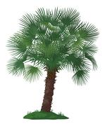 Palm Tree and Green Grass - stock illustration