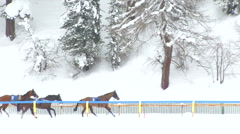 St Moritz grand prix horse race interrupted Stock Footage