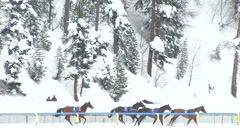 St Moritz grand prix horse race interrupted - stock footage