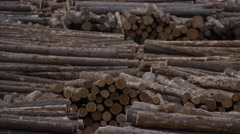 Pan across - Forestry and Wood Production Stock Footage