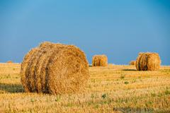 Summer Autumn Rural Landscape Field Meadow With Hay Bales After Stock Photos
