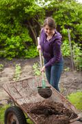 woman fertilizing garden bed with compost from wheelbarrow - stock photo