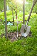 photo of tree being planted by shovel at sunny day - stock photo