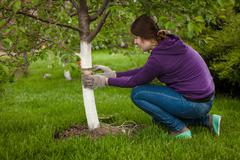 woman tying band around tree to heal bark - stock photo
