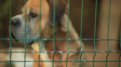 A dog sadly peers out of a cage. - stock footage