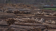 Logging Industry - Forestry and Wood Production Stock Footage