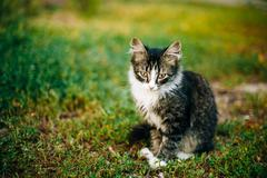 Small Cat Kitten Sit In Green Summer Grass - stock photo