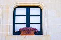Cacti in flower pot  on window Stock Photos