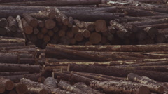Logs in the yard at a saw mill Stock Footage