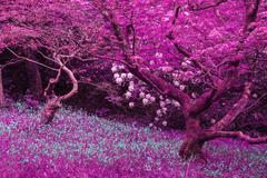 Stunning infrared landscape image of forest with alternative color - stock photo