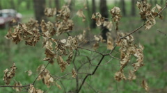 Dry leaves on a branch Stock Footage