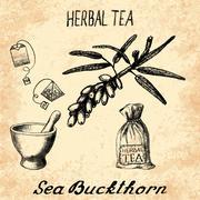 Sea buckthorn herbal tea. Set of vector elements - stock illustration