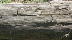 Cracked bark on a tree trunk Stock Footage