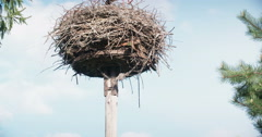 Stork in the nest Stock Footage