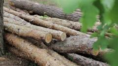 Felled logs lie in a meadow Stock Footage