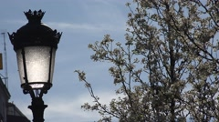 4K Blossom flower tree public lamp romantic cityscape springtime white bloom day Stock Footage