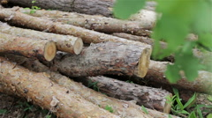 Felled logs lie in a forest in a clearing Stock Footage