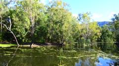 Australian Saltwater crocodile boat tour Stock Footage