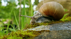 4K shot. Life of snails, shooting acceleration - stock footage