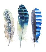 Hand drawn watercolor feather set. Boho style. illustration isol Piirros