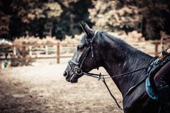 portrait of black horse close-up - stock photo