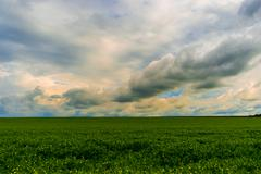 Summer landscape with green field, clouds before rain Kuvituskuvat