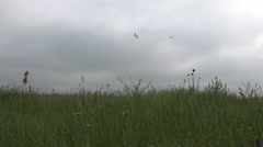 Small plane circling over a green meadow in bad weather, Agriculture, 4k Stock Footage