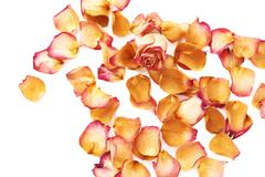 White surface covered with pink rose petals and single bud as a romantic - stock photo