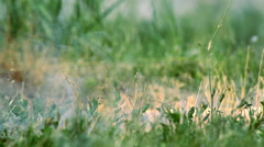 Smokescreen on the Grass Stock Footage