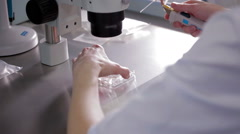 Medical research in the laboratory insemination Stock Footage