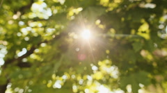 Ray of sun flashes through the foliage - stock footage