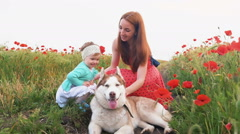 Mother and her little daughter playing with siberian husky dog in poppy field - stock footage