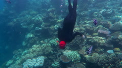 Person free divin  in a  coral reef at the Great Barrier Reef Queensland Stock Footage