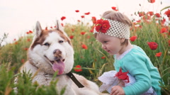 Little baby girl playing with siberian husky dog in poppy field, slow motion - stock footage