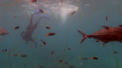 Person free dive  with tropical fish at the Great Barrier Reef Queensland - stock footage