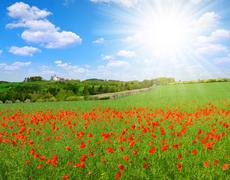 Spring landscape with poppy field Stock Photos