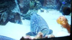 beautiful exotic fish in a big aquarium - stock footage