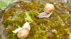 4K shot.  Two Snails  life in moss macro view, shooting acceleration - stock footage