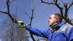 Man trim prune fruit tree twigs with trimmer in garden. Hand shot - stock footage