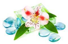 Clarity spa concept with flower - stock photo