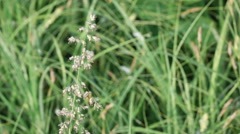 Field grass in early morning Stock Footage
